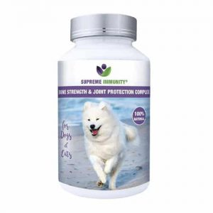 bone strength for dogs