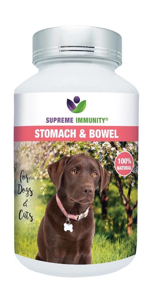 Stomach & Bowel